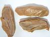 Abies amabilis (ABAM)