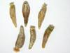 Tetradymia canescens (TECA2)
