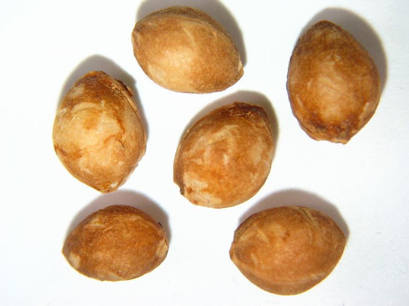 Prunus virginiana (PRVI)