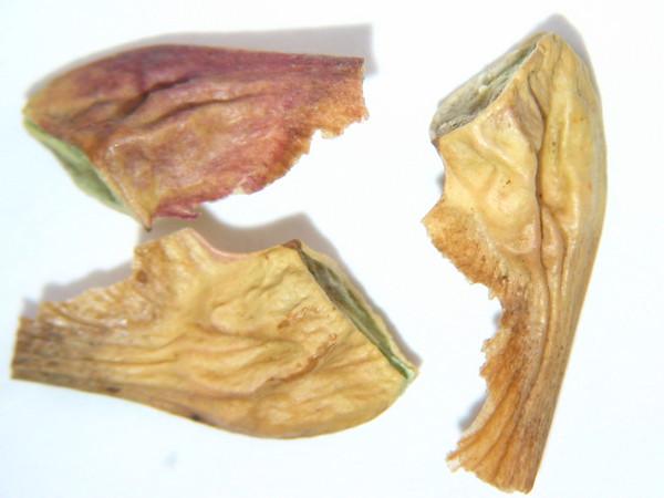 Acer glabrum var. douglasii (ACGLD4)