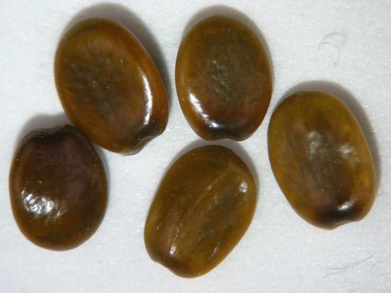 Ceanothus cuneatus (CECU)