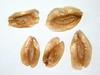 Thuja plicata (THPL)