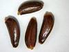 Cirsium neomexicanum (CINE)