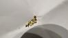 heavy sedge - Carex gravida (CAGR4)