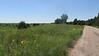 prairie thistle - Cirsium canescens (CICA11)