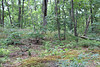 Wavy hairgrass - Deschampsia flexuosa (DEFL)