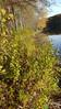 Seedbox - Ludwigia alternifolia (LUAL2)