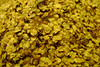 Sweet birch - Betula lenta (BELE)