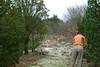 Eastern redcedar - Juniperus virginiana (JUVI)