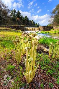 Perryville Dam  Spring
