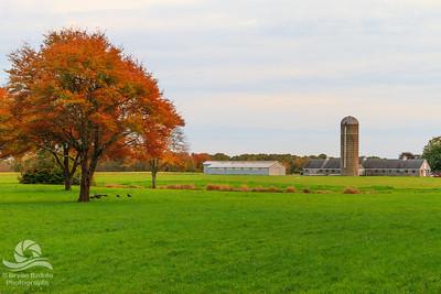 Almeida Farm