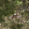 ++++++Hummingbird Test Shots (Manual) – Version 2