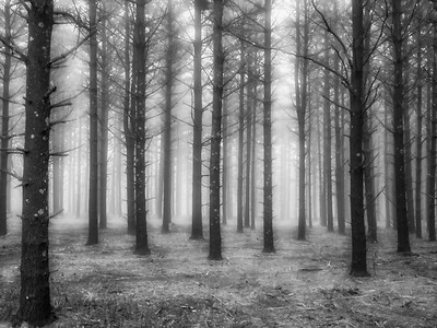 5.9.2019 Through the fog