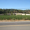Quintesa Winery on the way to Calistoga
