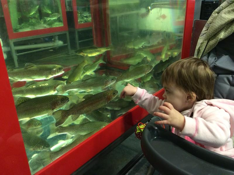 Audrey Looking At Fish at Wholey's
