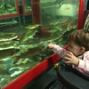 Audrey Looking At Fish at Wholey's