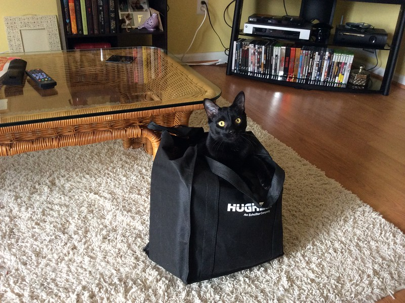 Binx in a Bag