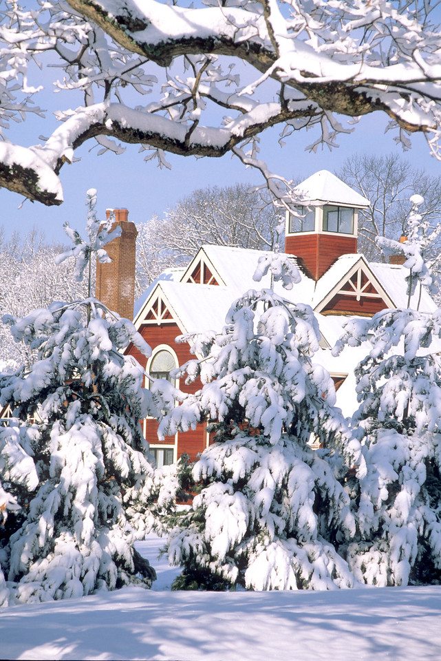 Snowed in - McLean, Virginia
