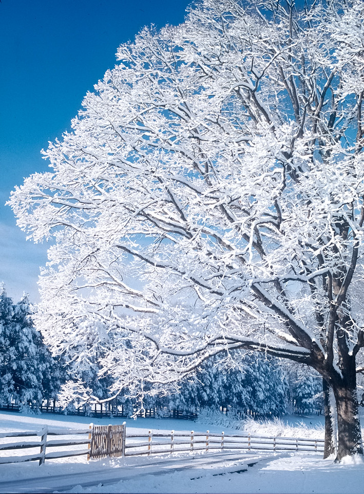 Winter scene - Wolf Trap, Virginia