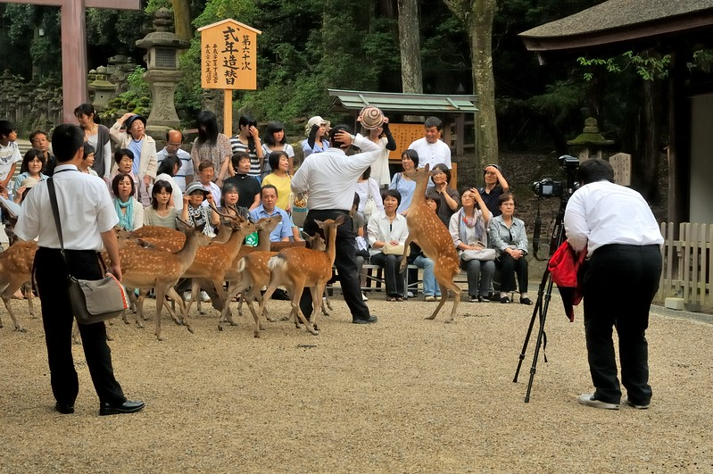 Taking a group picture in the deer park - Nara, Japan