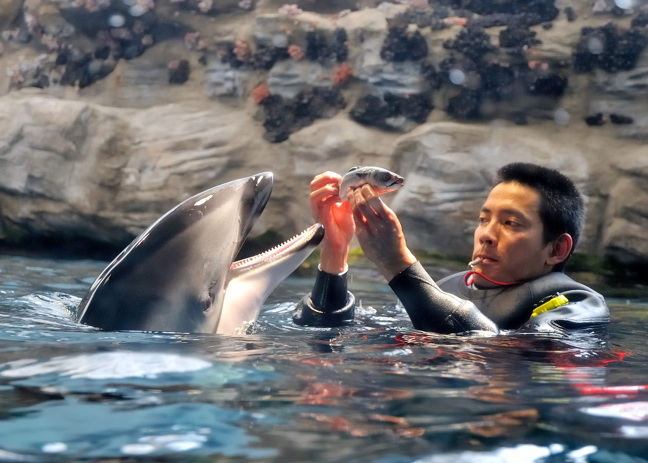 Swimming with dolphins - Osaka Aquarium Kaiyukan - Osaka, Japan
