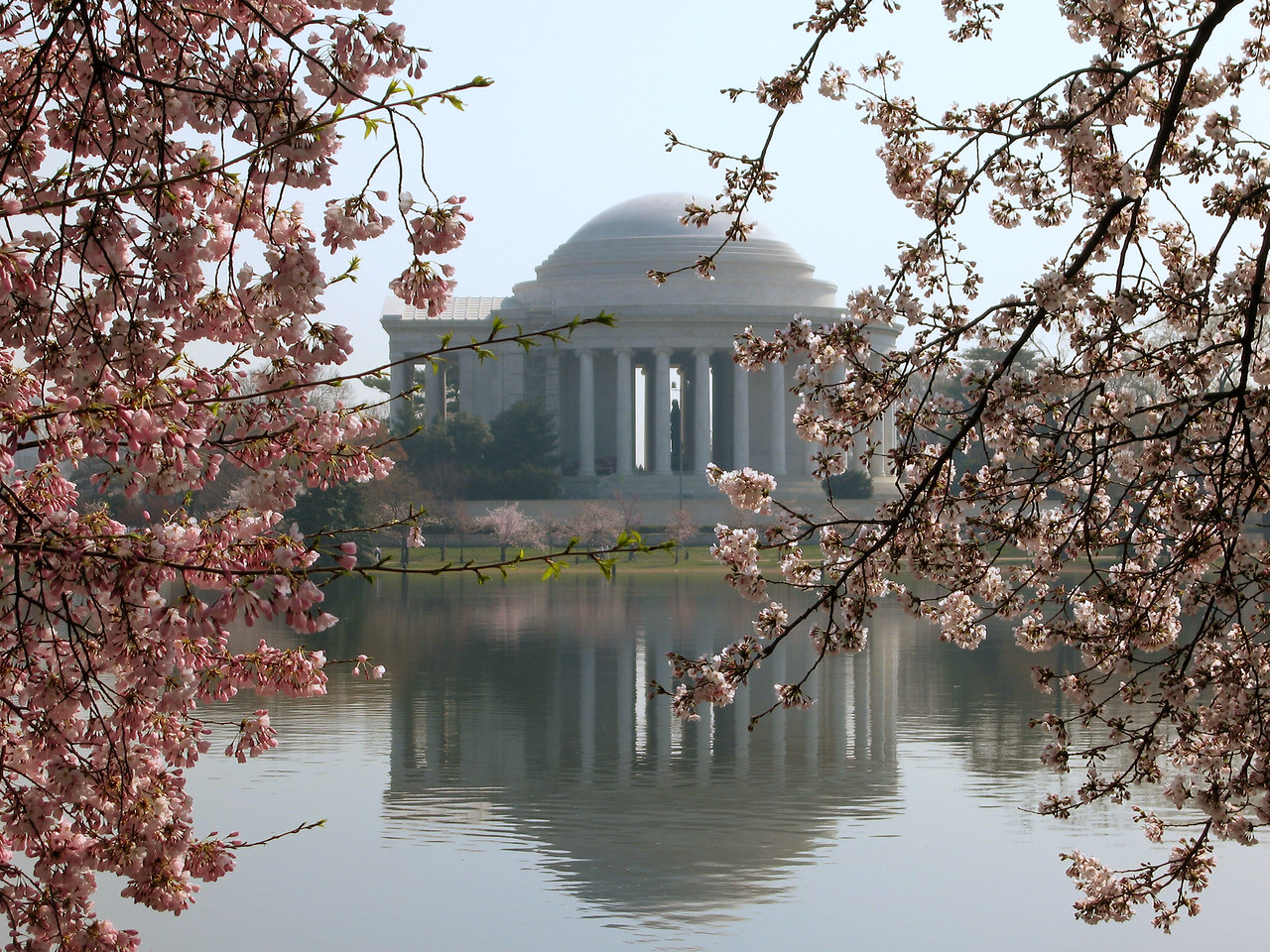 Blossoms detail with Jefferson Memorial - Washington, DC