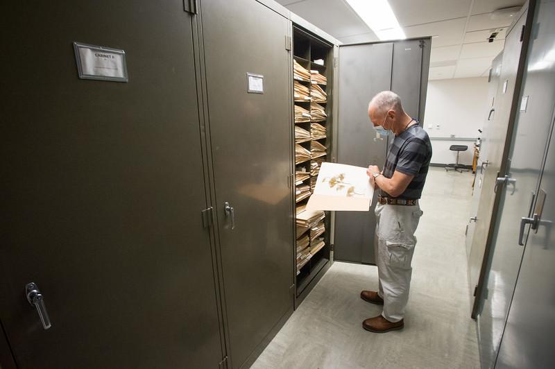 Jim Battaglia working in Eckert Herbarium at SUNY Buffalo State College.