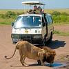 Safari Scene, Masai Mara Game Reserve, Kenya