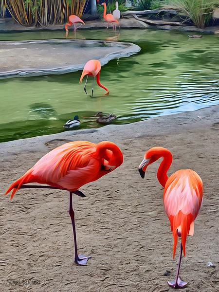 Michael Karchmer Balboa Park Flamingos, San Diego