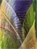 Suz  Karchmer Unfurling Series: Deep Purple Iris - Water Drops