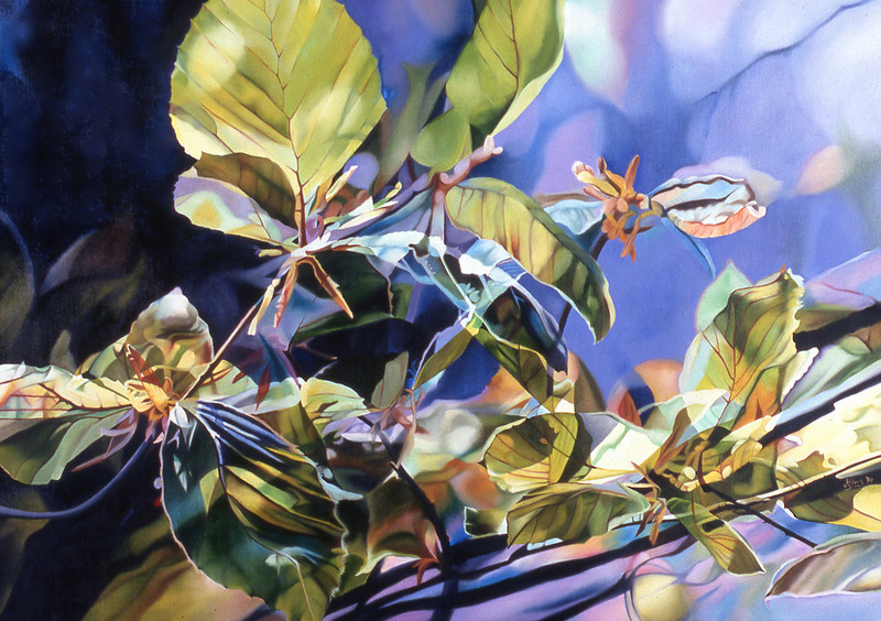 """""""FRED'S BEECHES"""" ~ 36"""" x 50"""""""