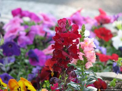 0627_7981_Flowers_Near_Kingsbury_Grade