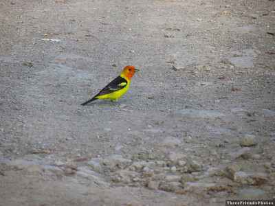 0612_3471_bird_in_the_road