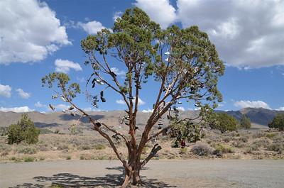 Shoe Tree on 395 north of Reno.