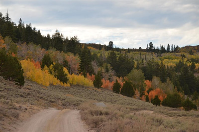 Fall Colors along road 083 East of Monitor Pass
