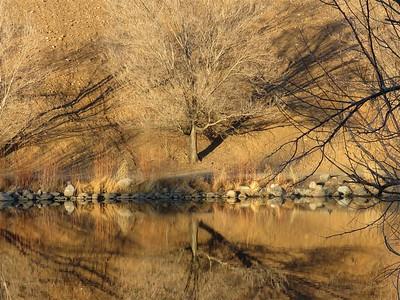 Tree reflections on the Pond at Rancho San Rafael - January 31
