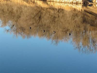 Floating on the Pond at Rancho San Rafael - January 31