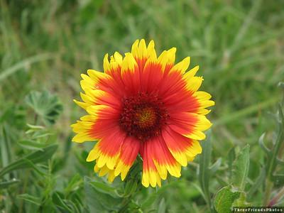 Flower in Colorado.