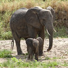 Tembo Mother and Baby