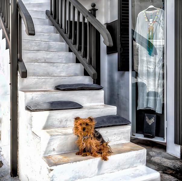 Guarding Mykonos