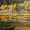 Beaver Ponds 001