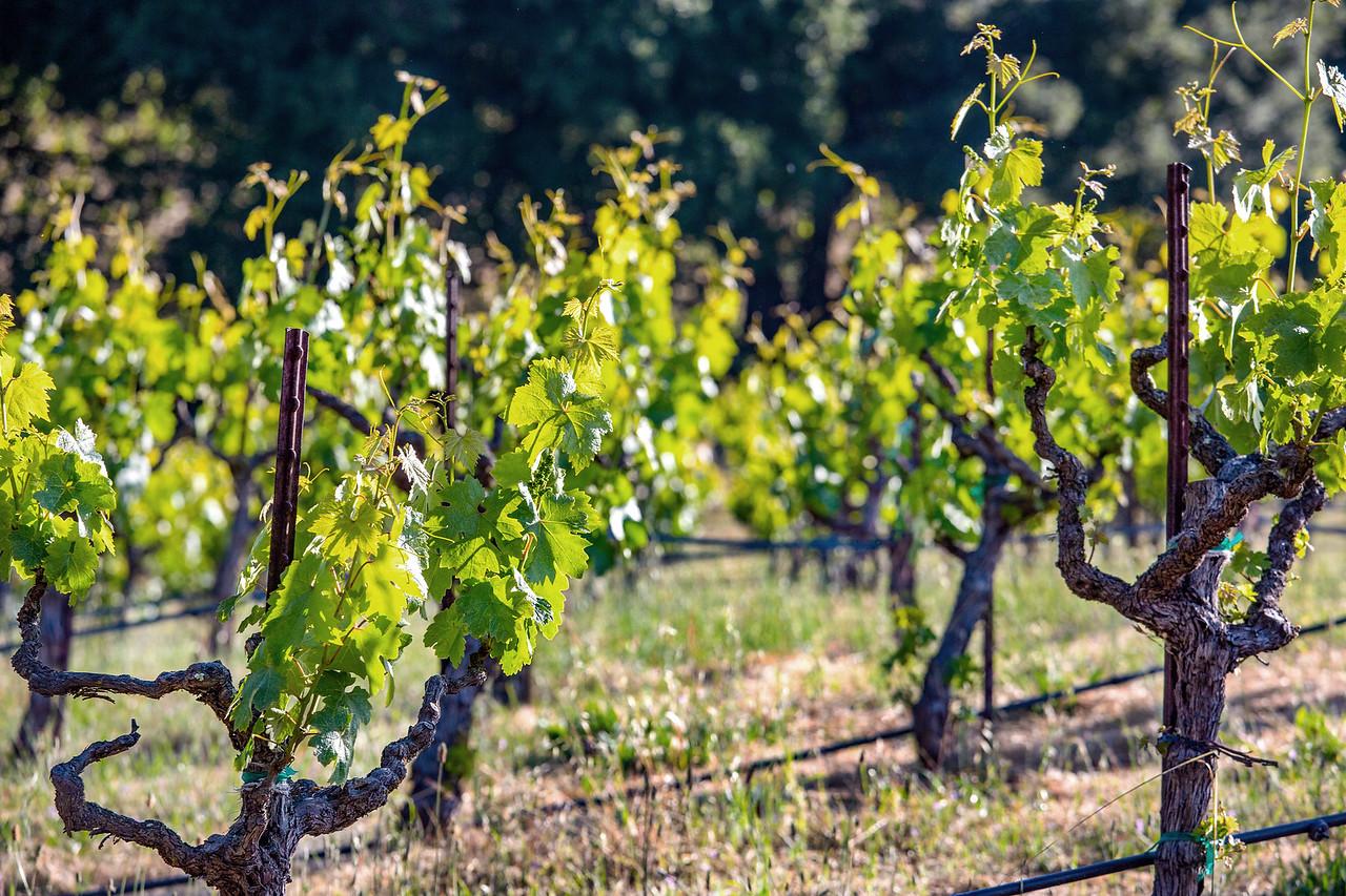 Vineyards 5 copy