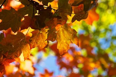 Import_ 2013-10-12_16-00-10__MG_4788_©JasonFinner_2013