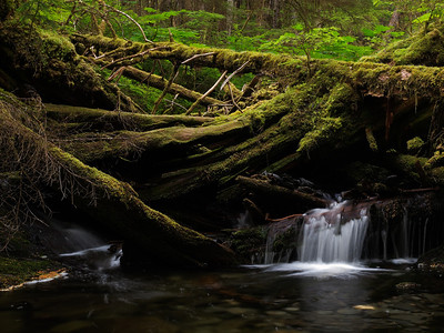 A pile of fallen logs has created a waterfall on a small stream on the John Muir trail in Juneau. August 8th, 2011.