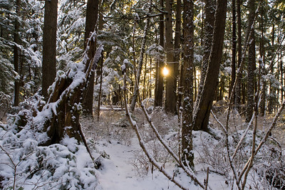"""The setting sun can be seen from the trail to Outer Point (near the """"Rainforest"""" Trail of North Douglas Island). December 28th, 2010."""