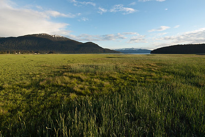 June is the true month of Green in Southeast Alaska, with even the grass near the sea still green. By mid July some of this grass will have dried and turned color. June 8, 2010.