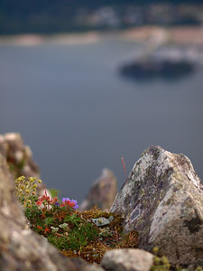 Some alpine flowers in a little rock nest with the Douglas harbor and Sandy Beach in the background across the channel. July 19, 2010.