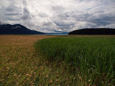 It's interesting to find patterns where different borders meet. In this case one type of grass (or sedge) has turned color well before another. You can see Islands of the green variety in the distance. Taken in the Mendenhall Game Refuge, August 20th, 2010.