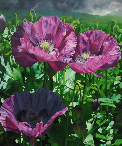 """TOM'S POPPIES""  ~ 48"" x 40"""