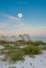Moon-SeaOatsGPT618